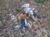 Walter Bert Mintus grave